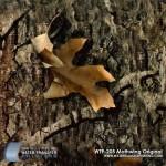 mothwing-original-hydrographic-film