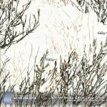 prairie-ghost-snow-ghost-hydrographic-film