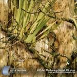 mothwing-marash-mimicry-hydrographic-film