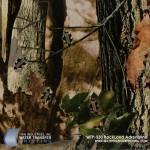 backland-adrenaline-hydrographic-film