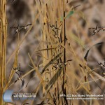 backland-waterfowler-hydrographic-film
