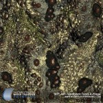 toadback-toad-a-flage-hydrographic-film