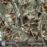 proveil-repear-buck-hydrograhic-film