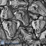 proveil-reaper-hog-hydrographic-film