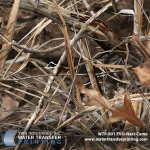 """TWN Industries Releases """"EVO"""" Hydro Dipping Film Pattern by Next Camo"""